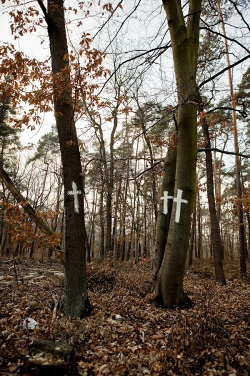 ma_20081231_bannwald_005
