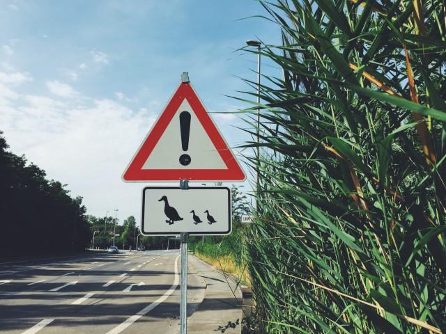 Die Bauschheimer Entenfamilie