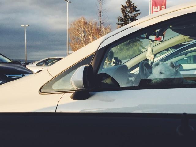 Verkehrskontrolle, zeigen Sie bitte mal Ihren Führerschein