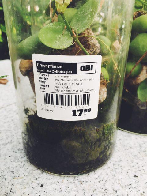 Tote-Tier-Pflanze