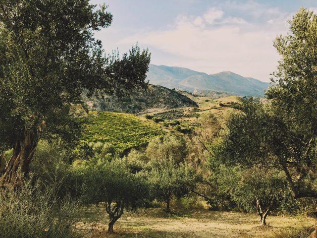 Oliven & Wein