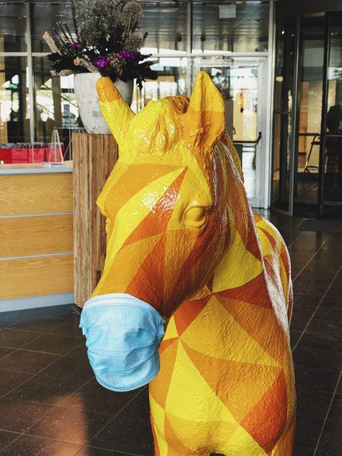 Dem Pferd heisst Horst